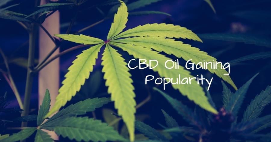 CBD Oil Gaining Popularity