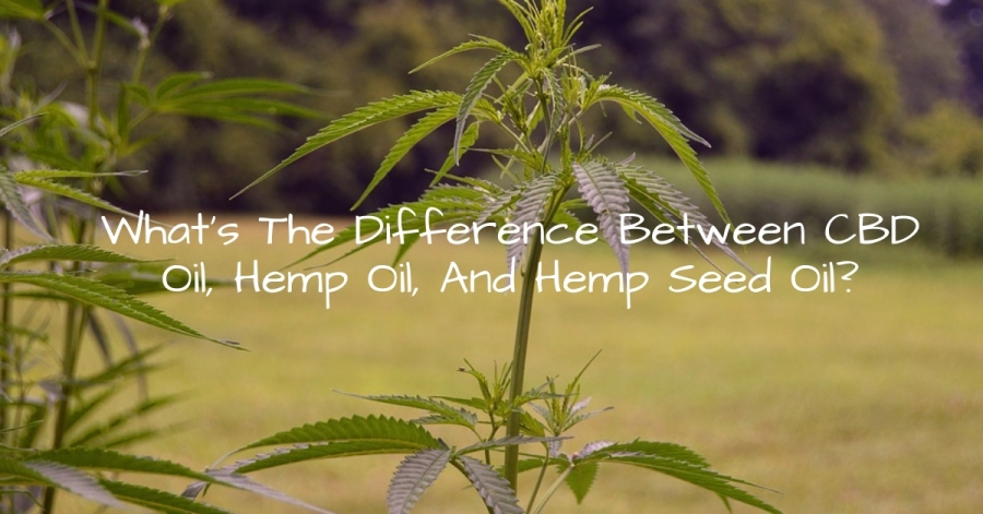 What's The Difference BetweenCBD Oil, Hemp Oil, And Hemp Seed Oil?