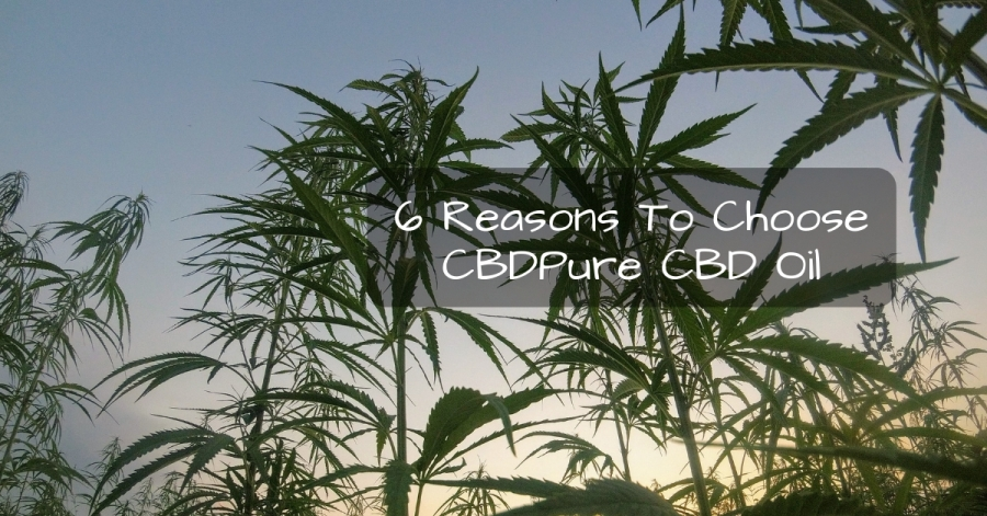 6 Reasons To Choose CBDPure CBD Oil